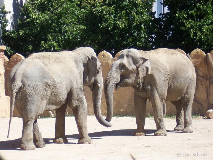 zwei Elefanten Zoo Leipzig